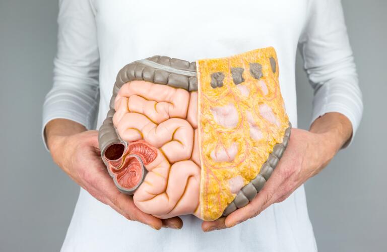 Woman holding model of human intestines