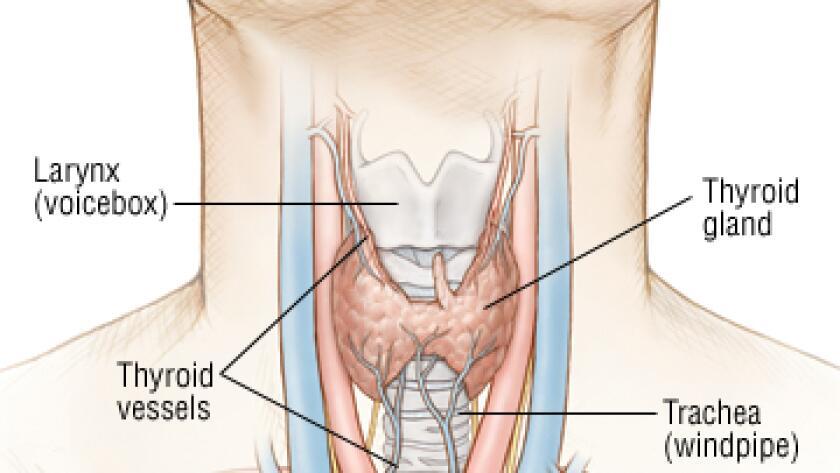 labeled glands, glands, throat, thyroid