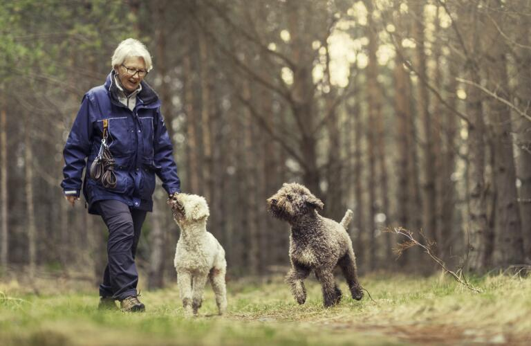 senior woman hiking with dogs
