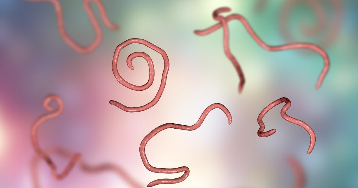 Az enterobiosis az Az enterobiosis az