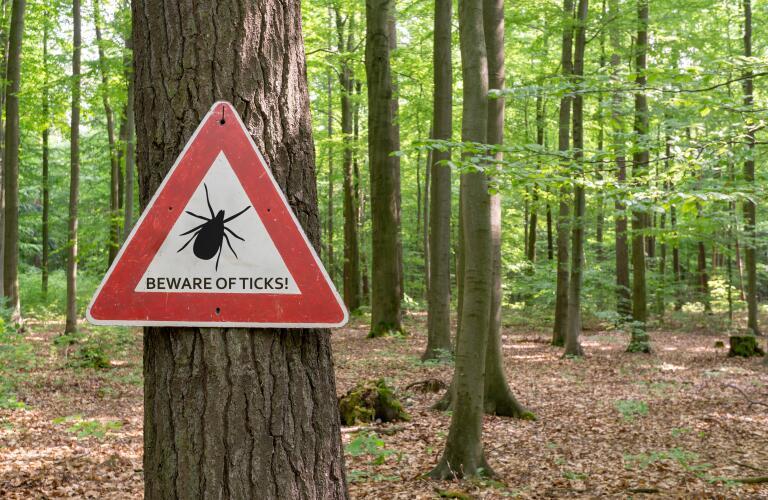 Beware of ticks warning sign in woods