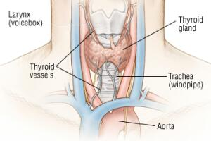 Thyroid Cancer Facts Healthgrades Com