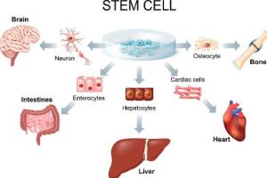 Stem Cell Research & Treatment Advances | Stem Cell Therapy