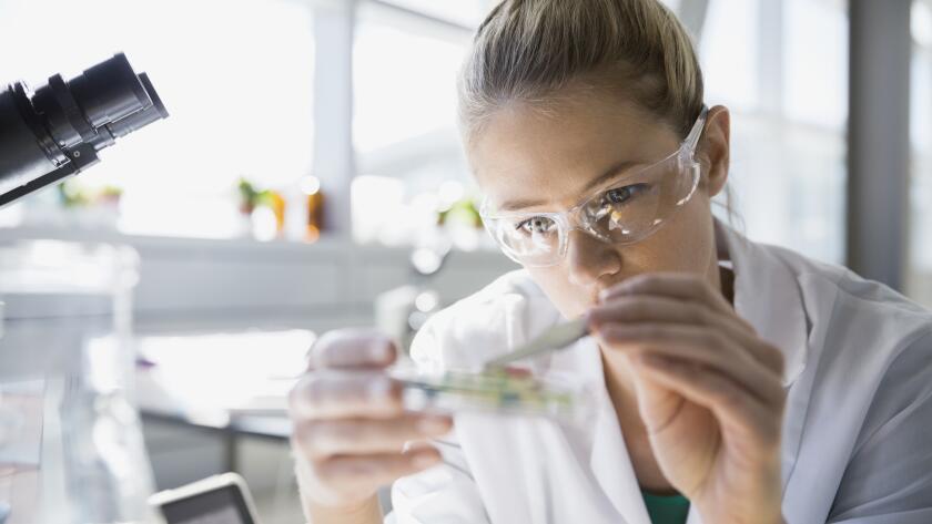 close up of female scientist examining petri dish in laboratory