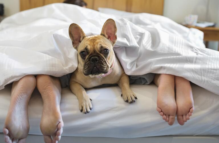 Dog in bed with owners