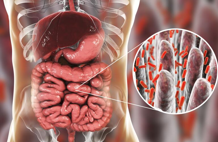 Computer illustration of the human digestive system, showing liver, stomach and intestines, with a close-up view of bacteria found in the intestines