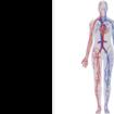 Peripheral Vascular Bypass