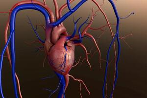 heart, blood, pump, aortic stenosis, heart valve, heart chambers,