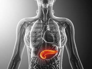 Endocrine Disorders - Symptoms, Causes, Treatments   Healthgrades com