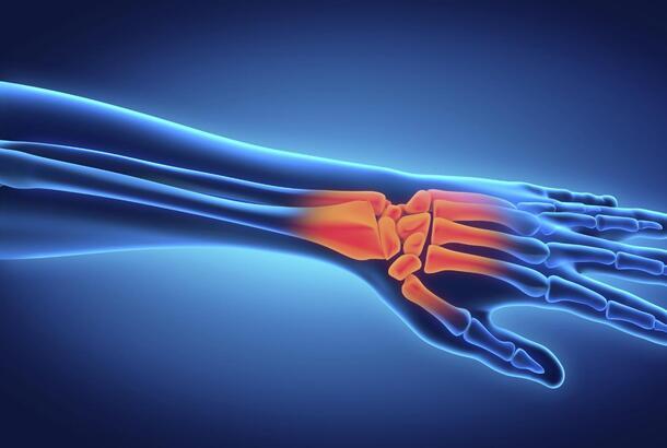Human hand anatomy